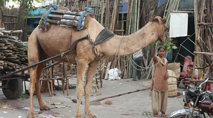 img-nlg-india-transport-camel
